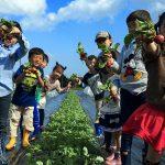 癒されたいなら土をいじって野菜作りがオススメの理由